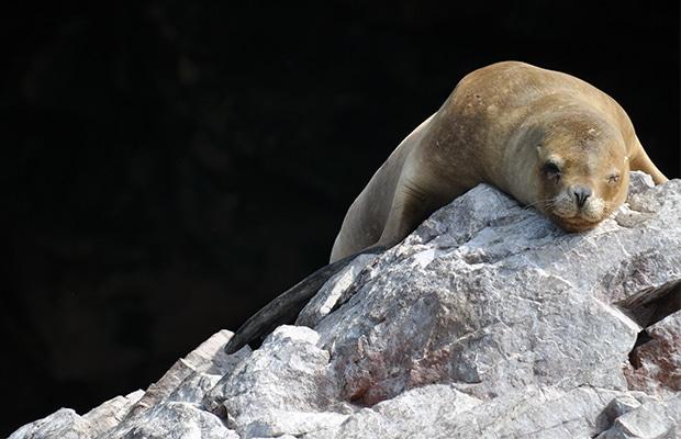 Ilhas Ballestas: santuário da vida marinha