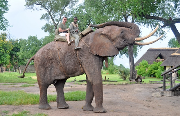 Como é o safári com elefantes na Zâmbia