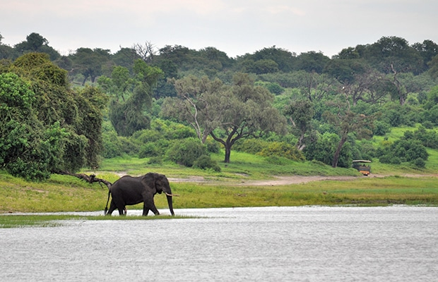 Como é o safári no Chobe National Park