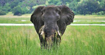 Como é o safári no Chobe National Park