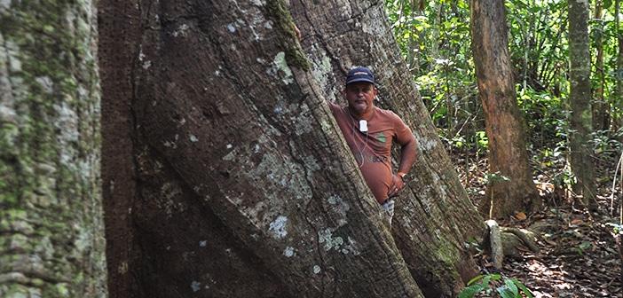 Seringal Cachoeira e a vida na floresta