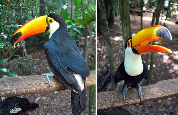 Parque-das-Aves-1