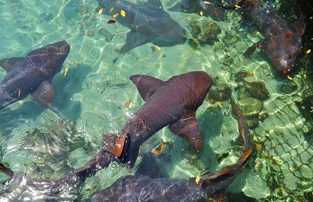 Cartagena: passeio pelas Ilhas Rosário