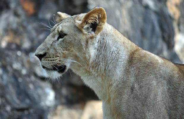 zoologico-de-cali-16
