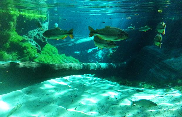 aquario-encantado-11