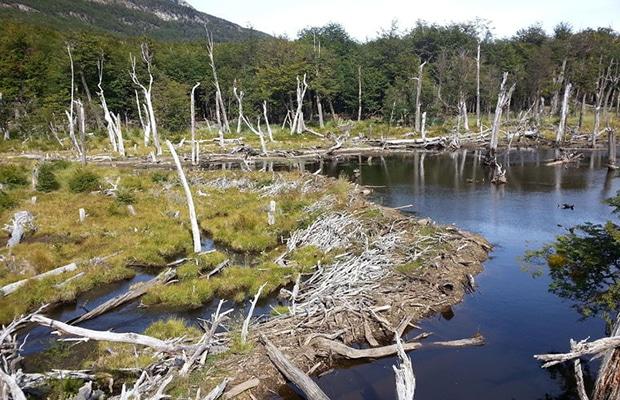 O que ver e fazer em Ushuaia
