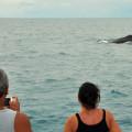 baleias-em-abrolhos-08