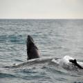 baleias-em-abrolhos-15