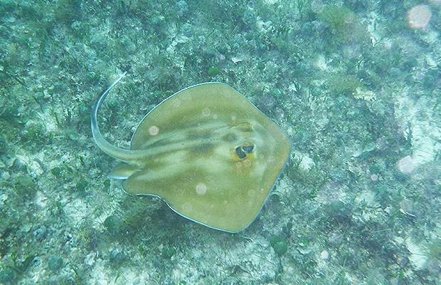 mergulho-em-abrolhos-07