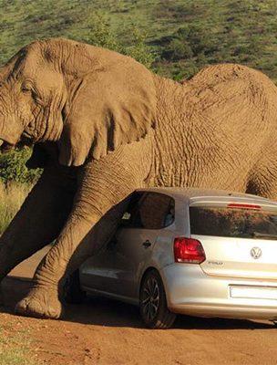 acidentes-em-safaris-03