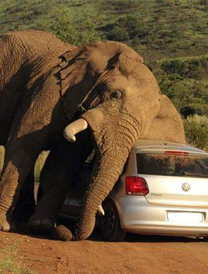 acidentes-em-safaris-04