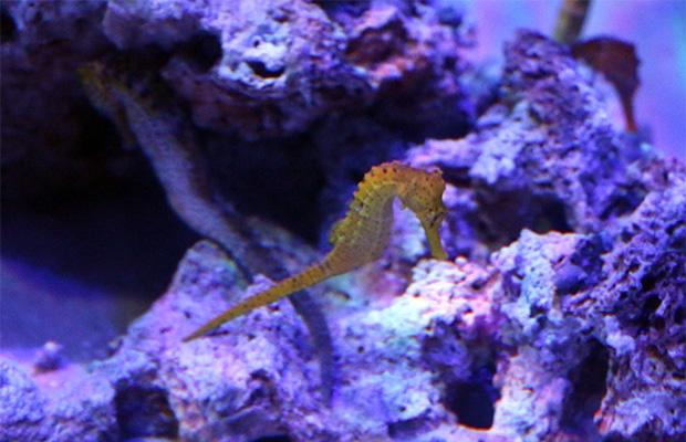AquaRio: uma visita ao aquário do Rio de Janeiro