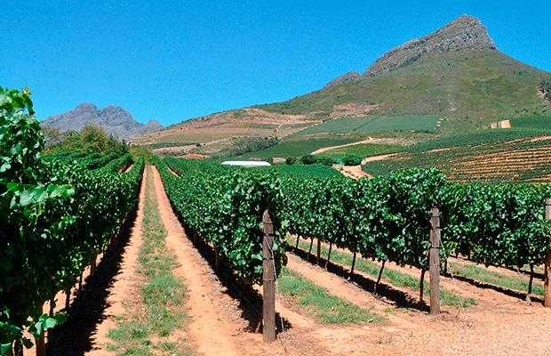 Conheça as comidas da África do Sul