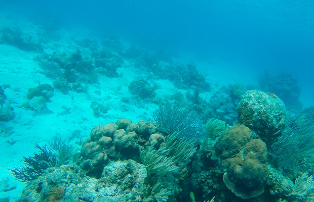 Um espetacular mergulho em Cayo Largo