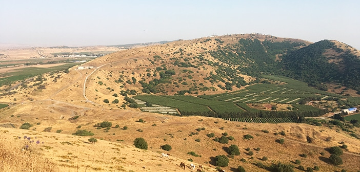 A experiência de ficar num kibbutz