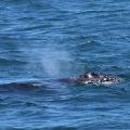 baleias-em-vitoria-05