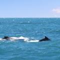 baleias-em-vitoria-06
