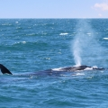 baleias-em-vitoria-09