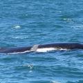 baleias-em-vitoria-10