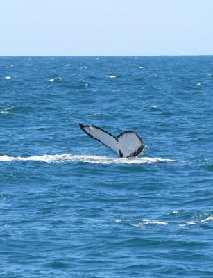 baleias-em-vitoria-13