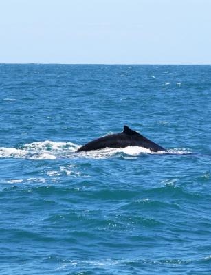 baleias-em-vitoria-14