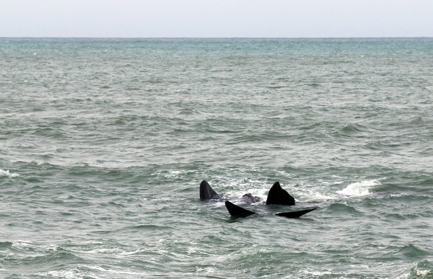 O avistamento de baleias em Santa Catarina