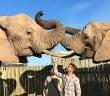 O incrível encontro com elefantes na África do Sul