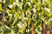Cinco destinos para curtir um vinho no inverno