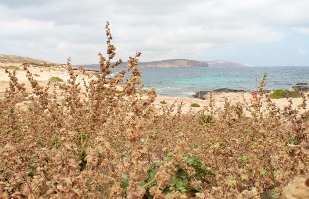 Coral Lagoon: um tesouro escondido em Malta