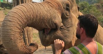 elefantes na Tailândia