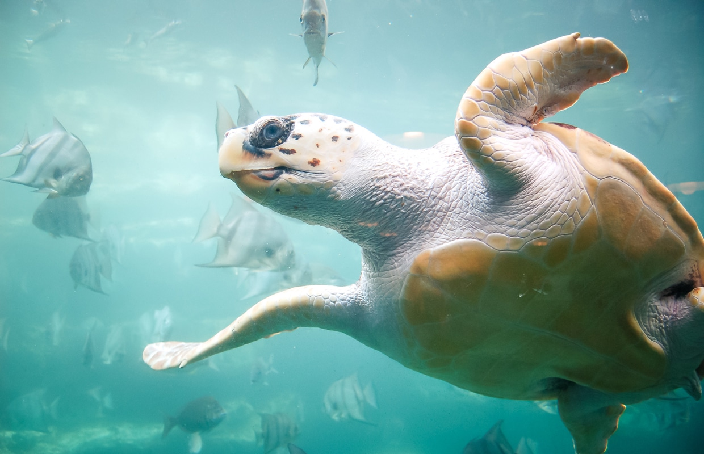 Baía das Tartarugas- Vitória/ES