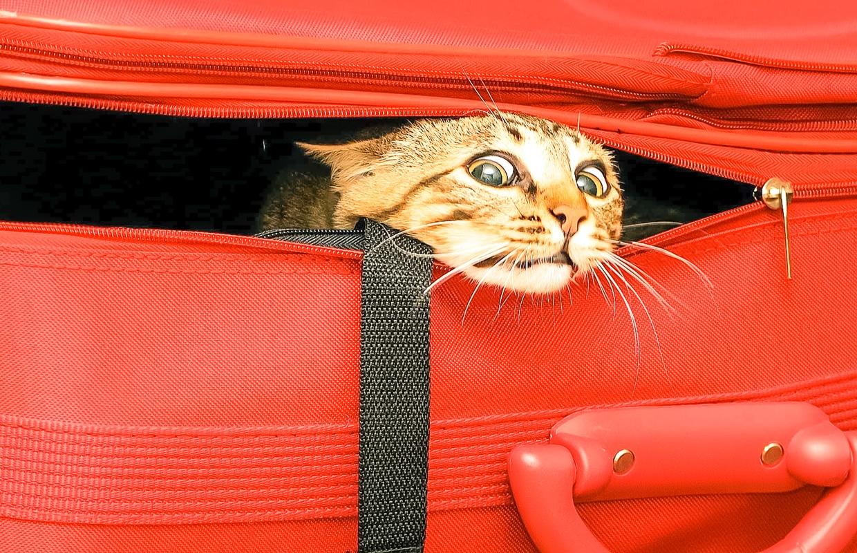 viajar com seu animalzinho